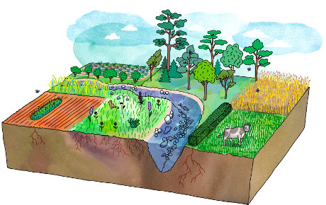 The range of different vegetated strips within and around agricultural fields, including; hedgerows, wildflower strips, beetlebanks, grassy borders, woody vegetated strips and forest margins. Illustration: Gunilla Hagström.