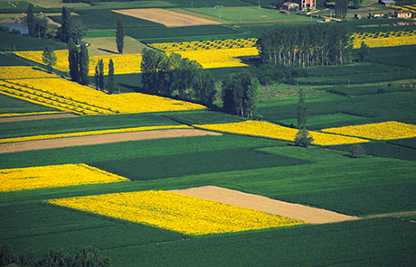 Farmlands with various crops. Copyright: Amanda Langford, from iStockphoto
