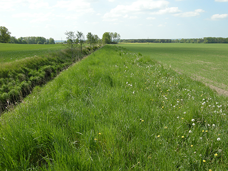 Buffer strips between farmland and watercourses can help conserve biodiversity and intercept pesticides and nutrients. Photo: Olle Kvarnbäck.